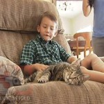 Hero Cat Tara Saves a Child from Aggressive Dog Attack