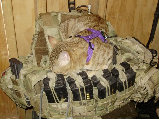 Cat and Soldier Save Each Other's Lives in Afghanistan