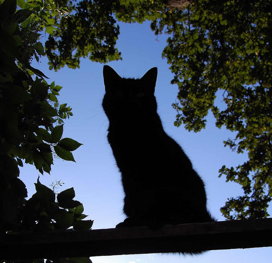 Shape of a cat sitting in a tree | Ozzi Cat - Australian National Cat Magazine