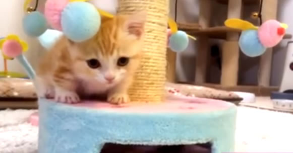 Cat Therapy Time - (The Cutest Cat Video) This Cute Orange-White Kitten Will Melt Your Heart!
