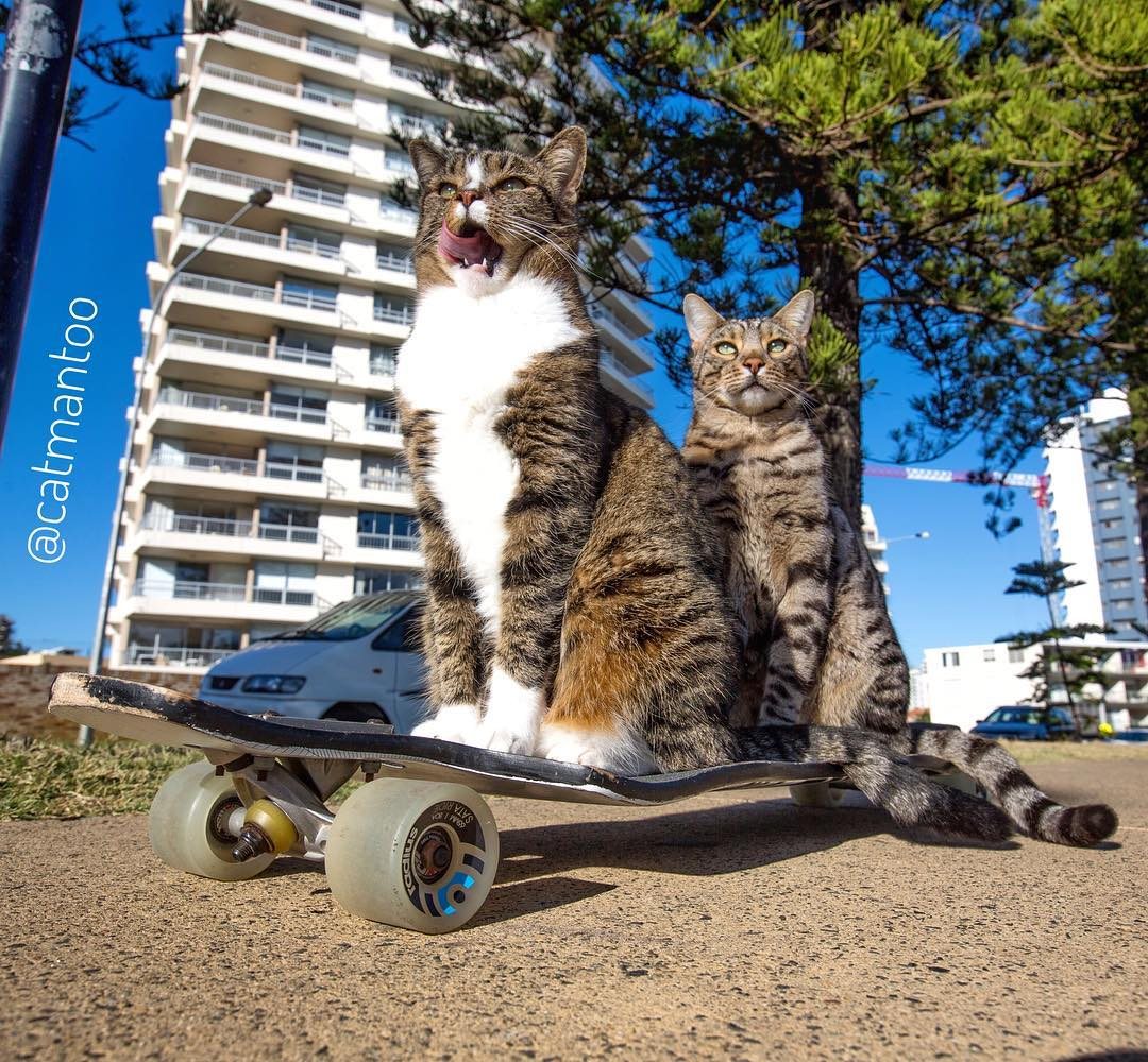 Didga and Boomer. Catmantoo. Skateboarding cats. Cat carnival - Carrara - Gold Coast - QLD - Australia - cat event
