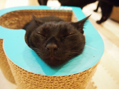 Cat Places - Cat Cafe Nekobiyaka - Black Cat Cm - Japan