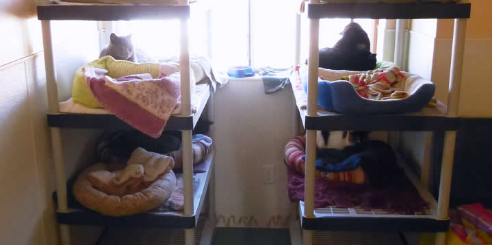 Cats in Bunkbeds