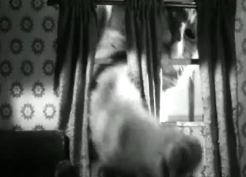 The cat Orangey was filmed in a few movies.