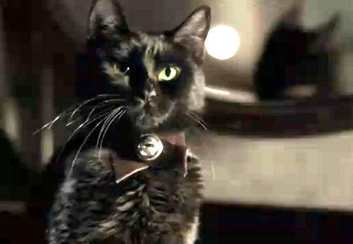 """The black cat Pluto from the """"The Black Cat"""" movie."""