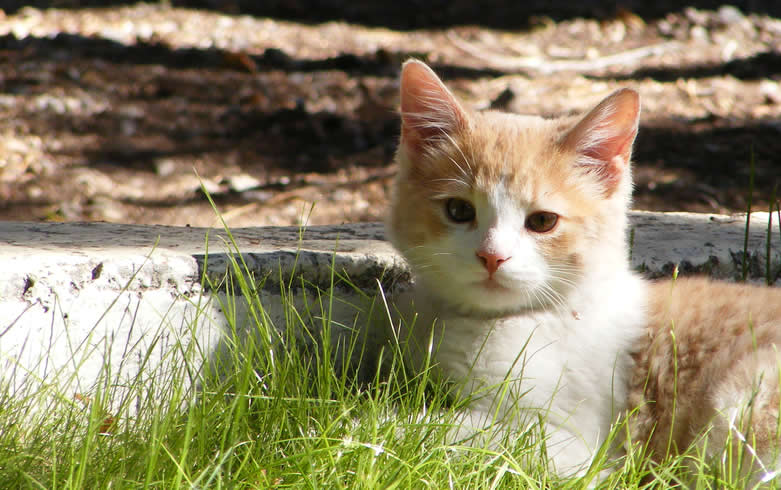 Cute Kitten in Grass - Cat Lover's Pick - Featured in Australian National Cat Magazine Ozzi Cat