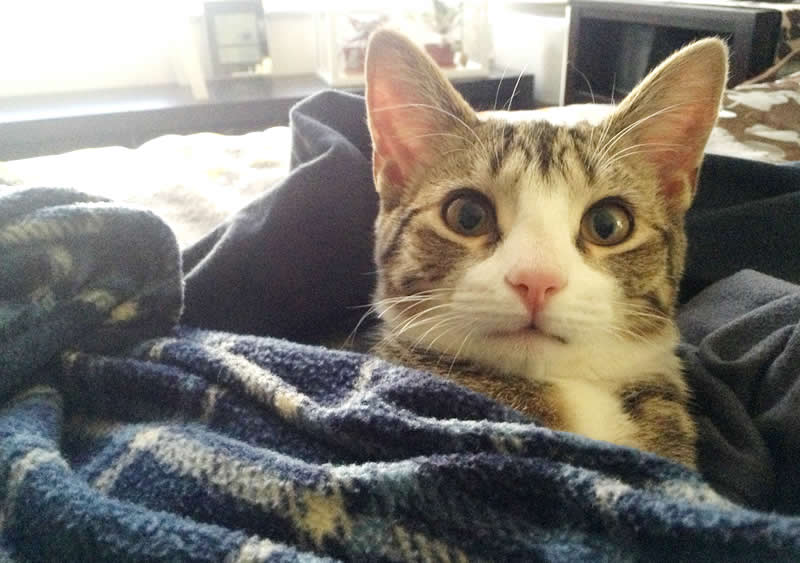 Cute tabby kitten sleeps in bed in cloths