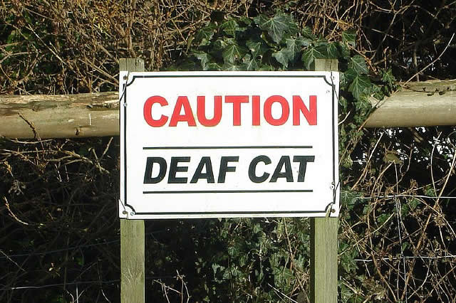 Tip: Install a Deaf  Cat sign. Put reflective stripes on it so it is visible at night.