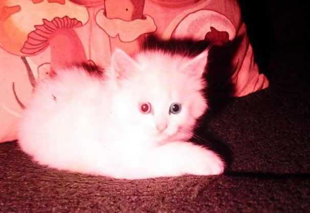 A special cat, a deaf kitten Tinkerbell - a beloved fur baby of Janine