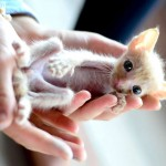 Teeny Tiny Thailand Kitten Saved by Elephant Volunteer and Dog Person