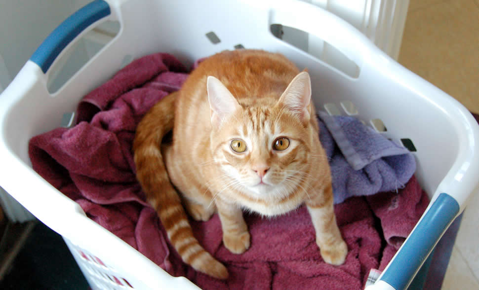 Ginger cat with yellow eyes in laundry on cloths