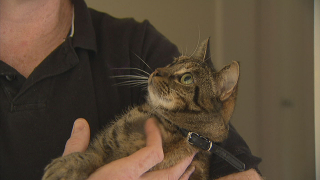 Just Adopted Tabby Cat Tilly Saves Family From House Fire In Melbourne