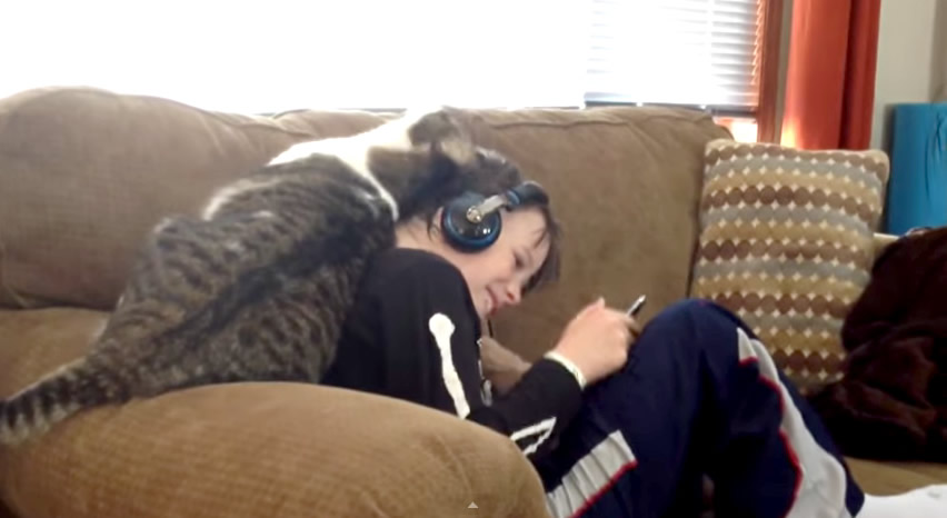 Cat Rubs Against His Human Showing Love and Affection - How cats say I love you
