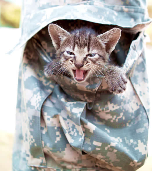 Kitten in emergency in soldier pocket meowing during evacuation