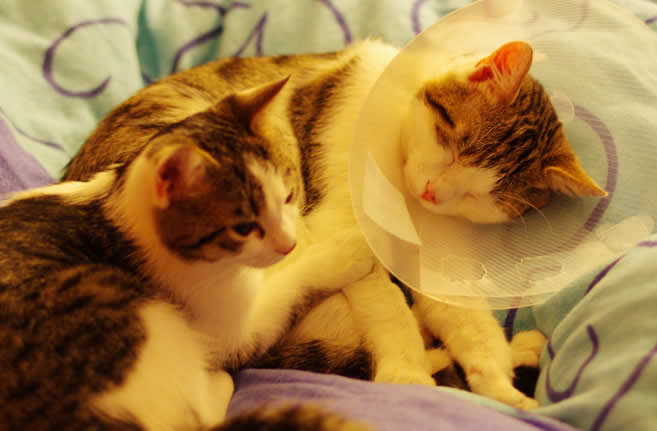 Kittens: A sick kitten and a caring kitten