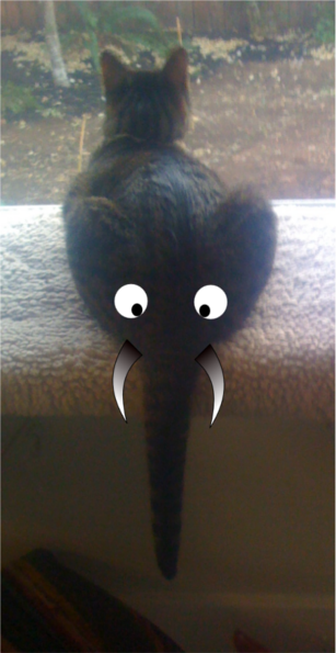 Lol cat as elephant