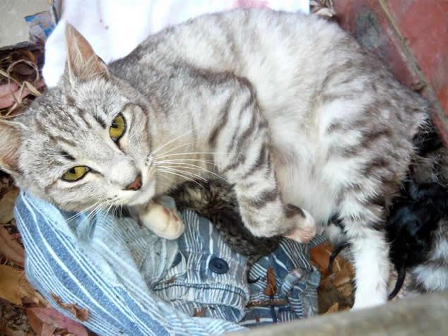 Magical rural cat Sabrina - Kittens