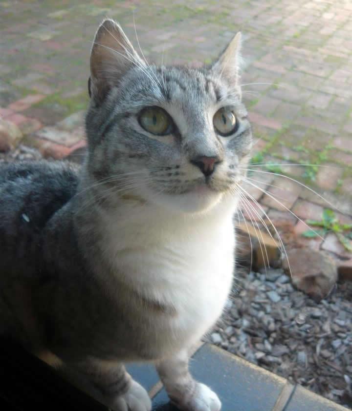 Magical rural cat Sabrina