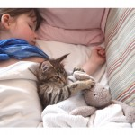 Maine Coon Kitten - Cat Thula Helps Autistic Child