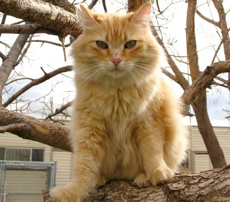 Orange cat Oscar is sitting on a tree