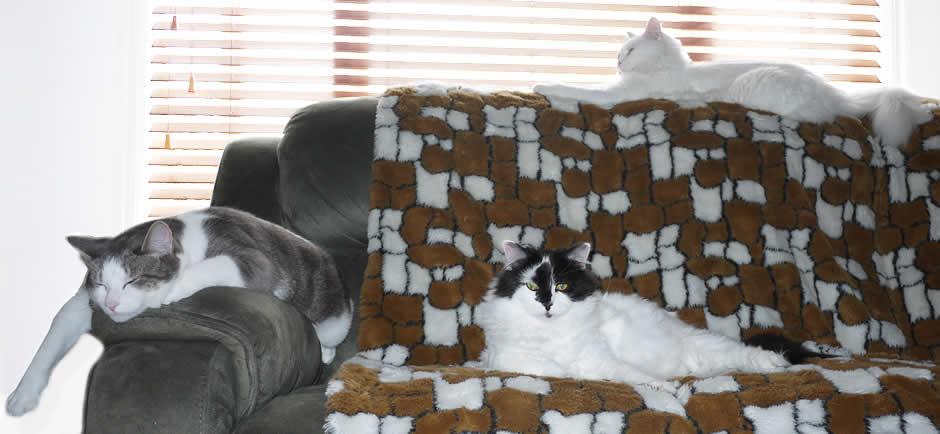 Ozzi Cat Fur Team - Cats Galore!