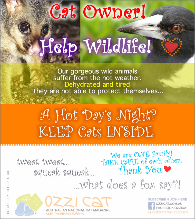 Cat Owner, Help Wildlife - Poster Infographics