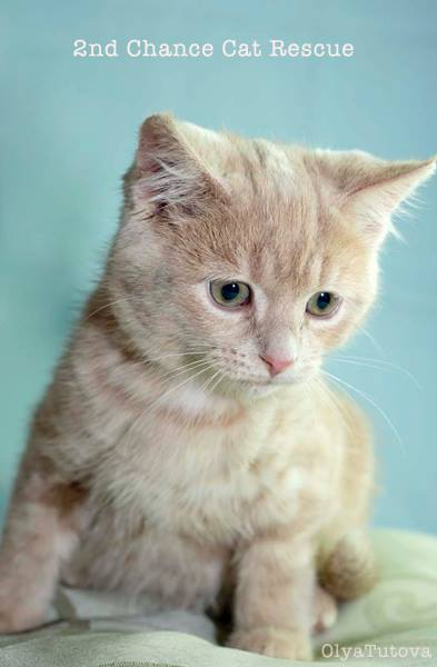 2nd Chance Cat Rescue - Cat Photography by Olya Tutova - Featured in Ozzi Cat Magazine