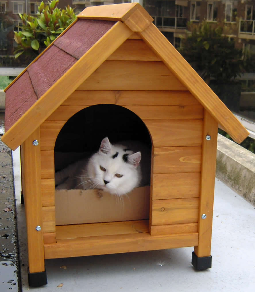 White cat with a black nose in a dog house